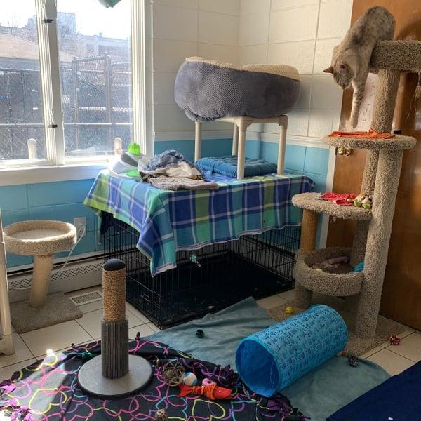 Community Cat Room